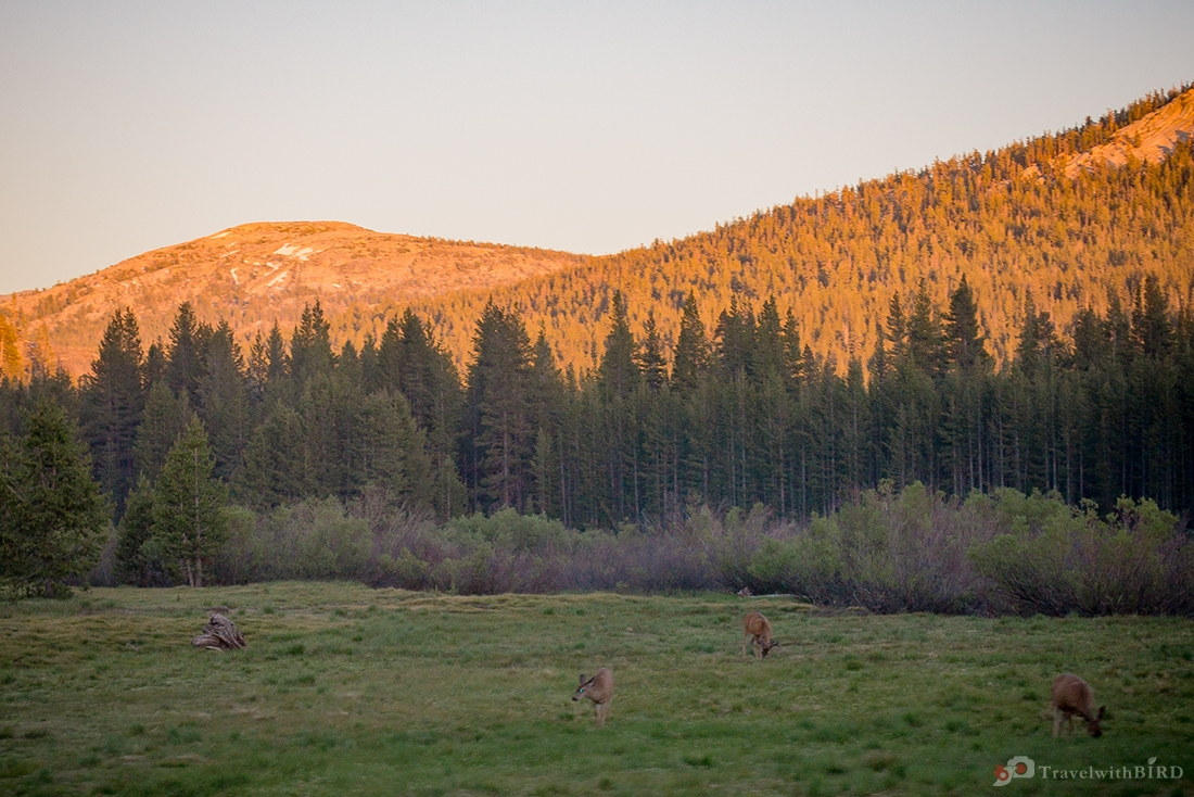 Bambi and his friends in the Yosemite Park