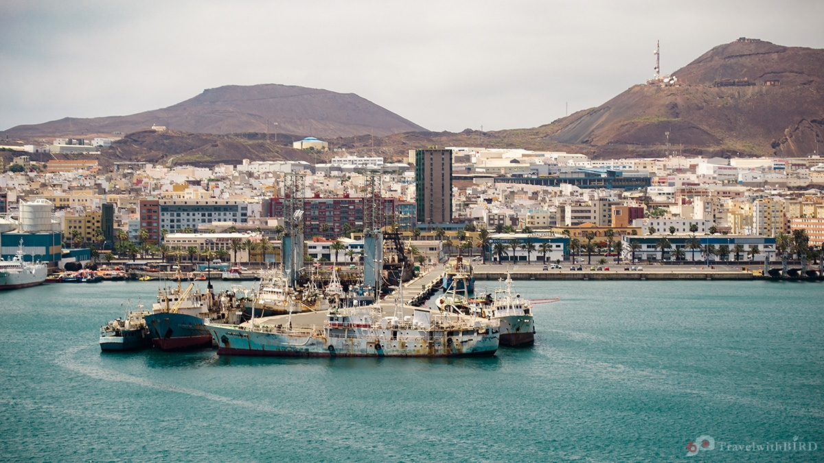Gran canaria bird on track - Port of las palmas gran canaria ...