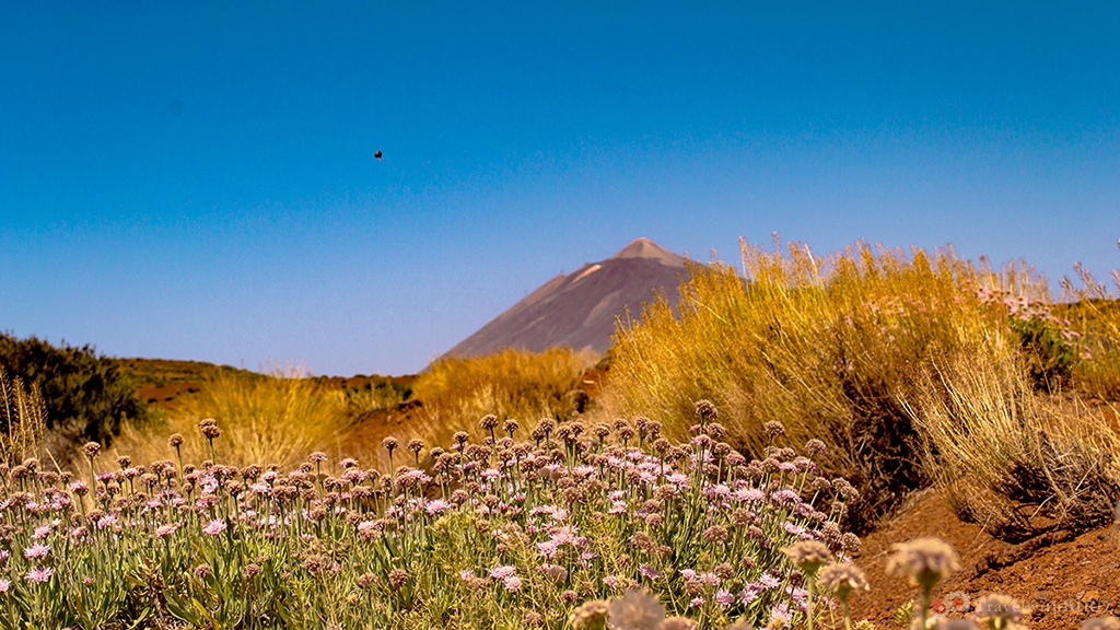 Bushes and flowers on Tenerife