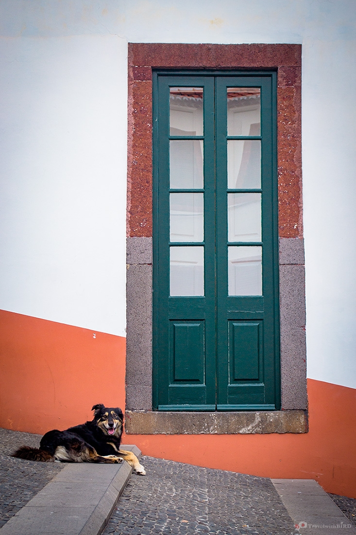 Dog and door in Funchal