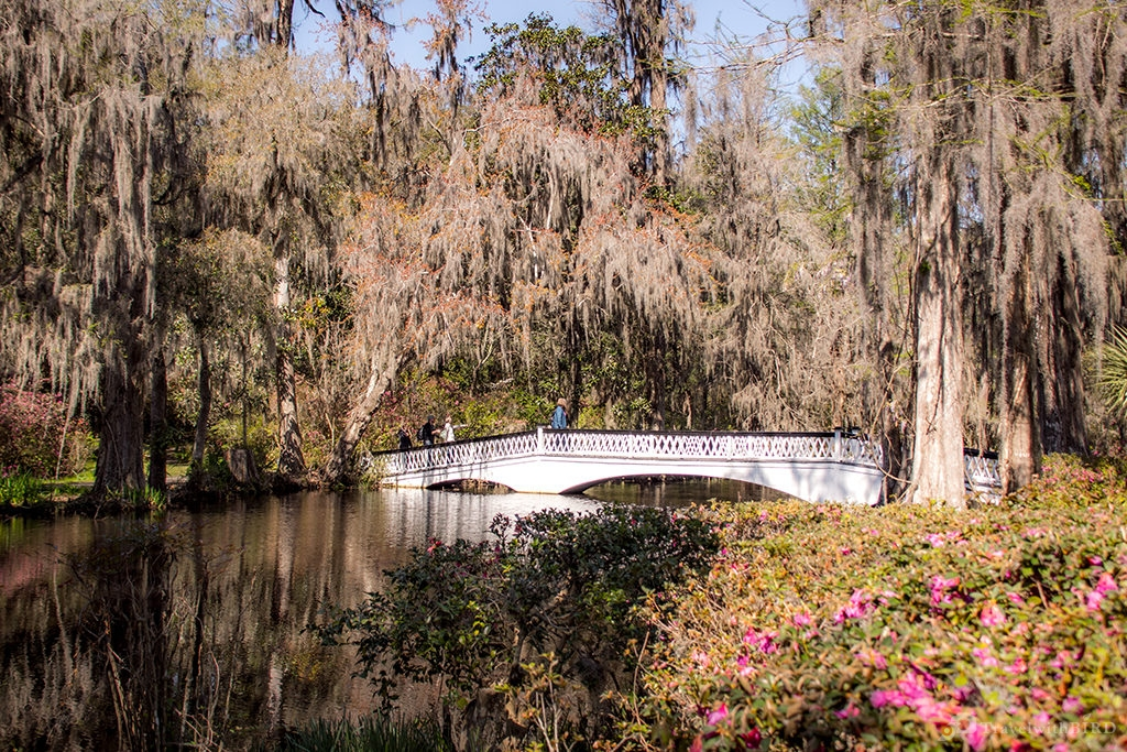 Bridge in Charleston Magnolia Plantations