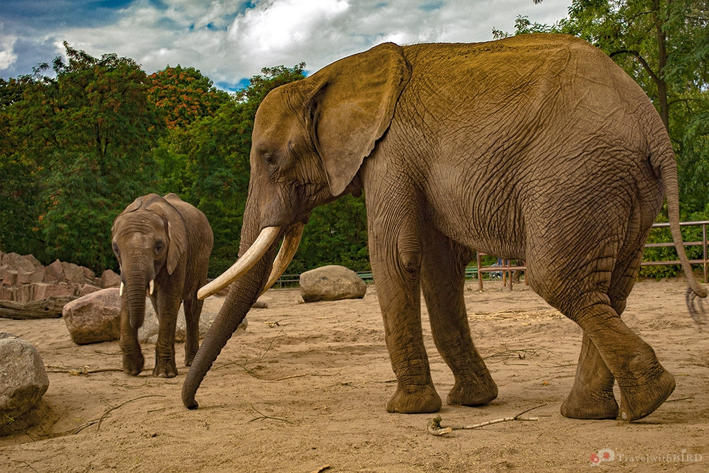 African Elephant and his Baby in Zoo Berlin