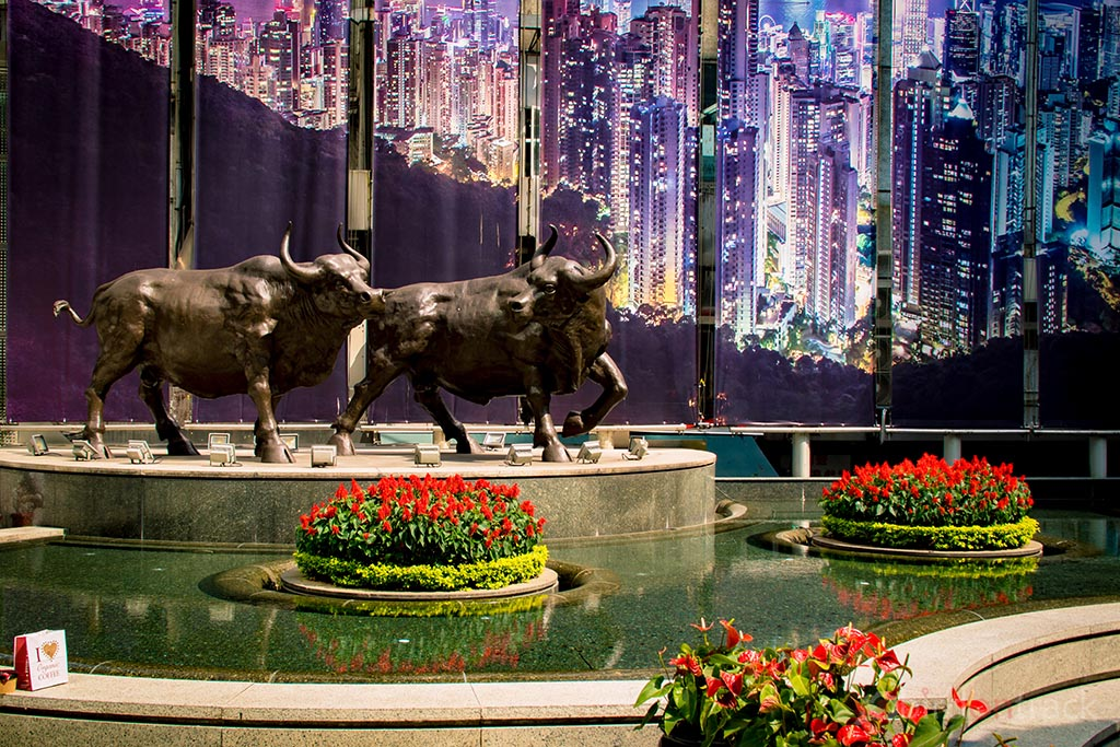 Bulls in front of The Center