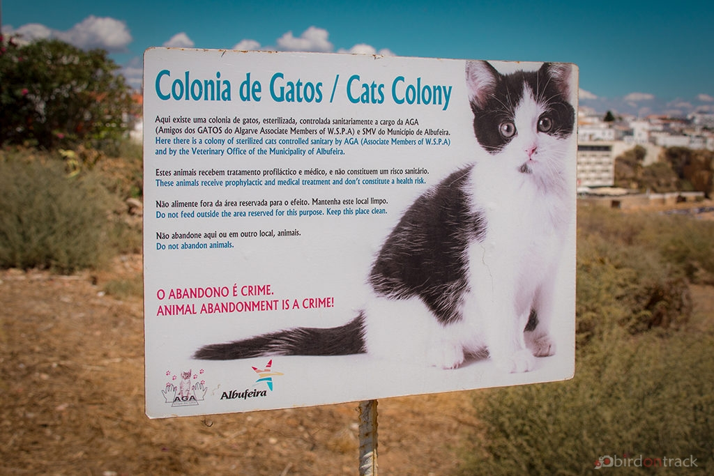 Cats colony in Albufeira