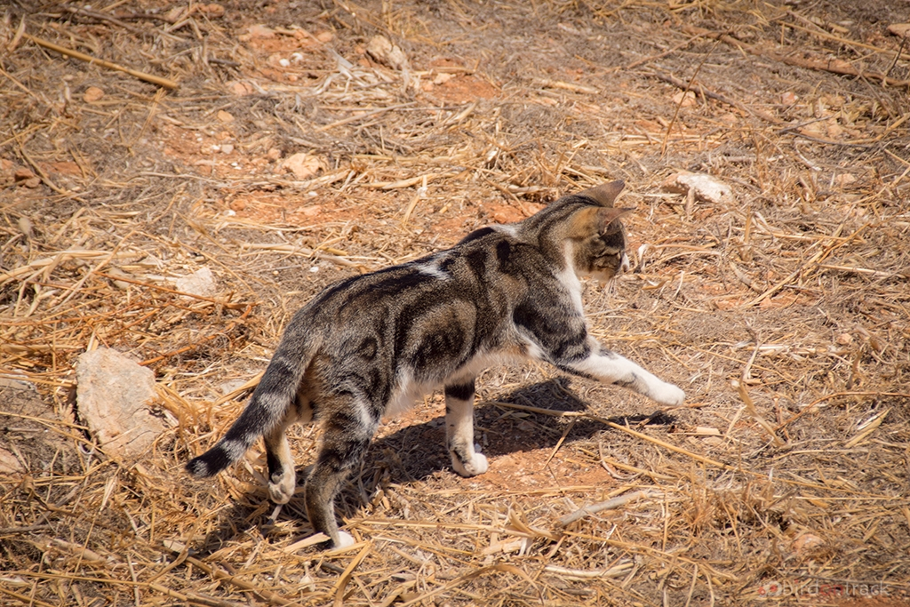 Cats of Albufeira