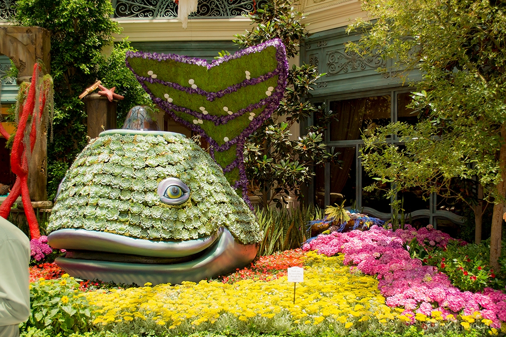 Flower Fish in the Bellagio