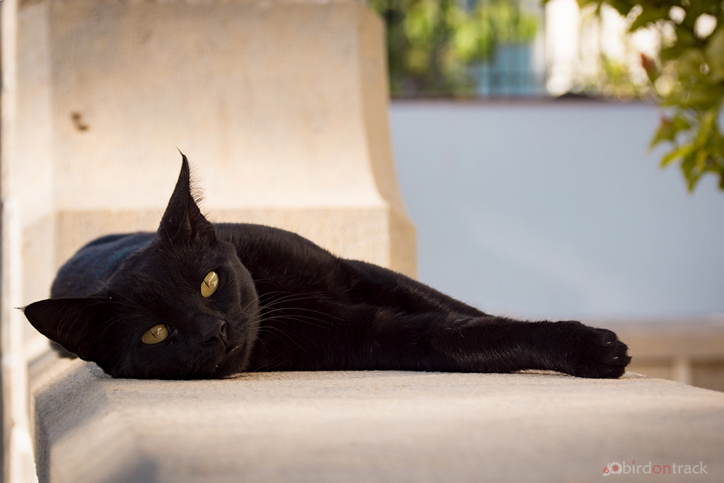 Little black panther in Albufeira