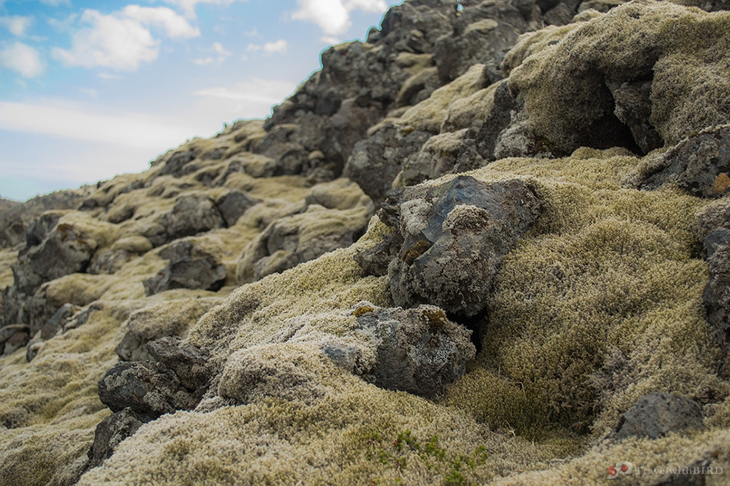 Moss rocks in nature reserve