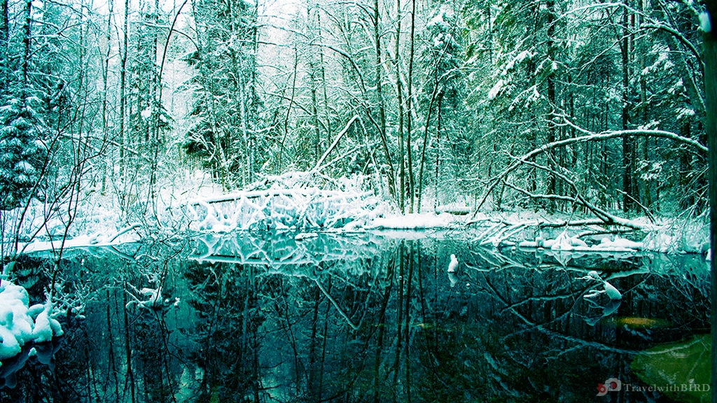 Mysterious woods in Finland