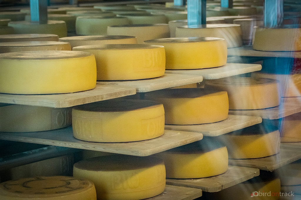 Tasty Appenzell Cheese