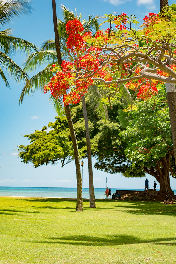 The colors of Oahu
