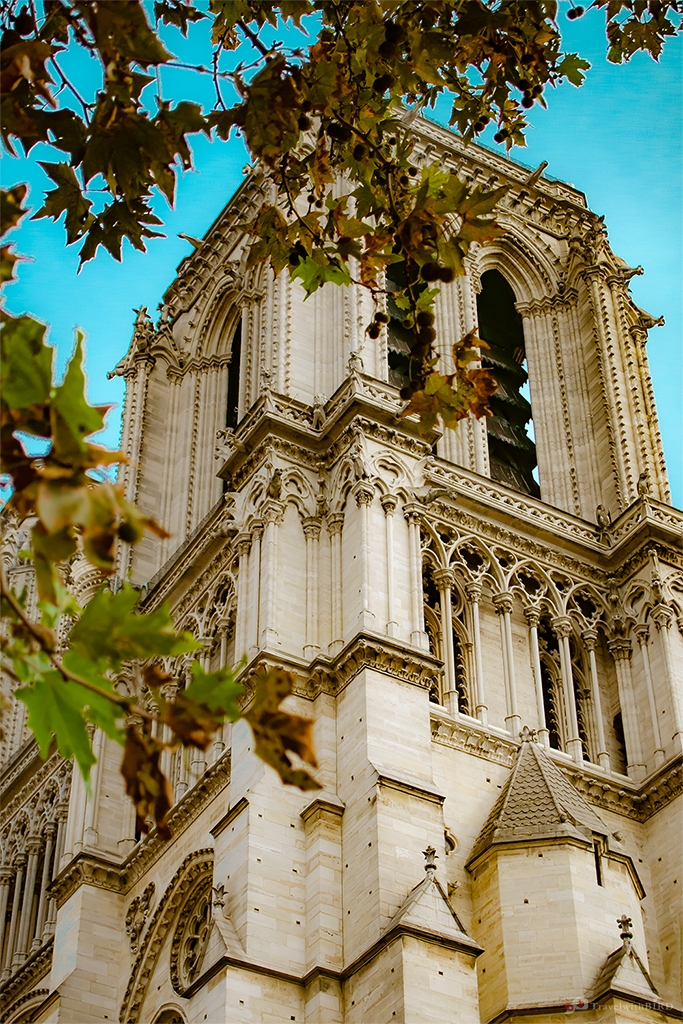 Tower of Notre Dame