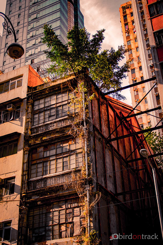 Tree growing on a building in Hong Kong