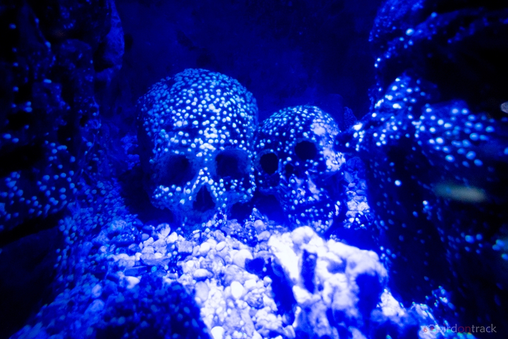 Underwater skulls in the Sea Life Constance