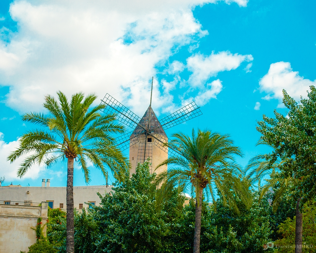 Windmill and Palms in Palma